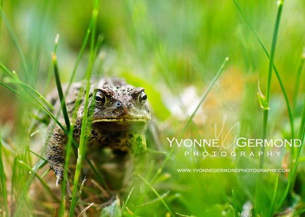 Edit 24 Yvonne Germond