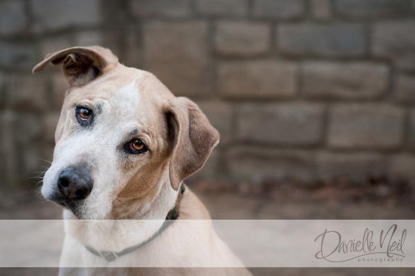 Dog Tilting Head for Photograph