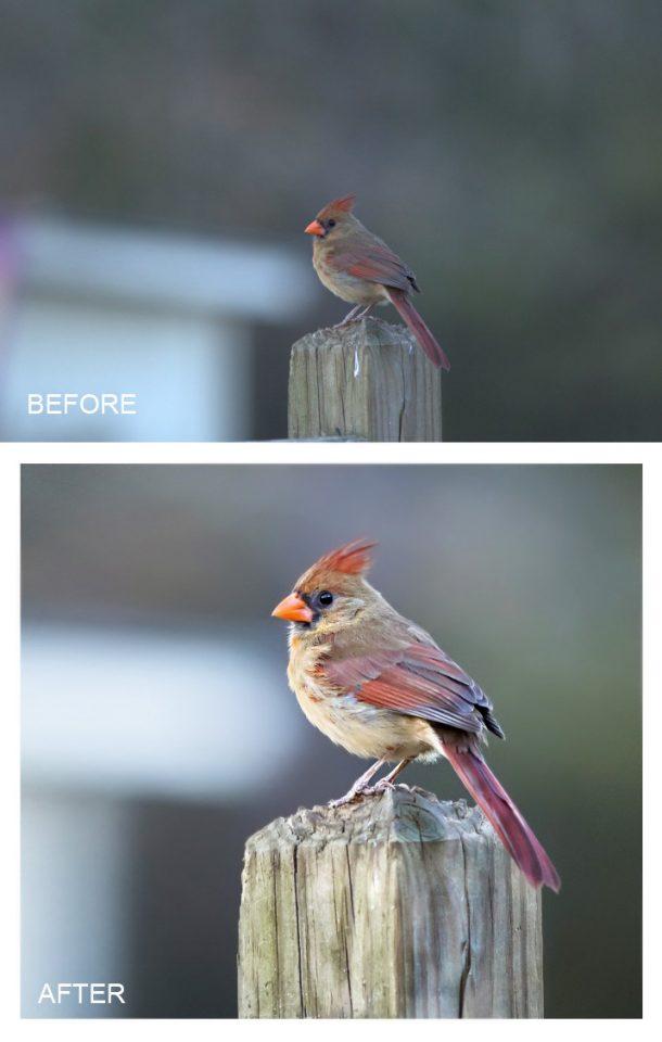 cardinal edit