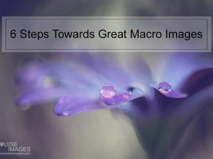 Flower Macrophotography