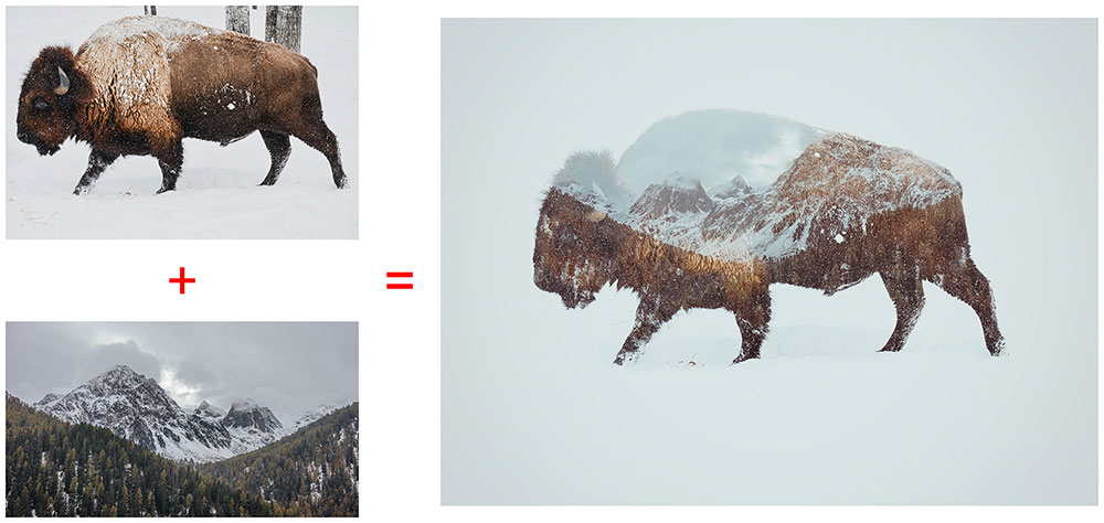 before-after-bison-double-exposure