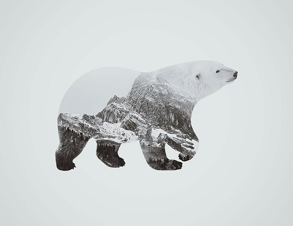 finished-prodcut-bear