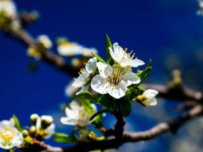 edited-photo-flowers