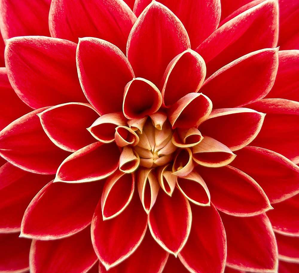 Up close flower macro